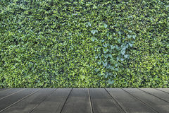 O verde deixa o fundo da parede Imagens de Stock