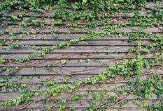 O verde deixa o fundo da parede Imagens de Stock Royalty Free