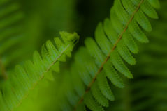 O verde deixa o macro Imagem de Stock Royalty Free