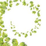O verde deixa o quadro isolado no branco Eps 10 Fotografia de Stock Royalty Free