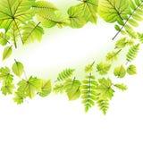 O verde deixa o quadro isolado no branco Eps 10 Imagens de Stock Royalty Free