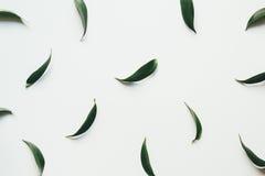 O verde deixa o teste padrão no fundo branco Fotos de Stock