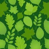 O verde deixa o teste padrão sem emenda Fotos de Stock
