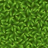 O verde deixa o teste padrão. Vetor sem emenda. Fotos de Stock Royalty Free