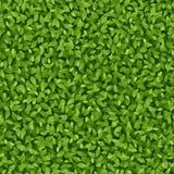 O verde deixa o teste padrão Fotos de Stock