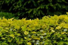 O verde deixa a parede Fotos de Stock