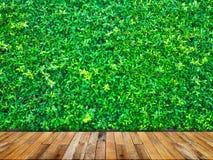 O verde deixa a parede com o assoalho de madeira Imagem de Stock