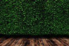 O verde deixa a parede natural com o assoalho de madeira Fotografia de Stock Royalty Free