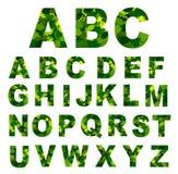 O verde deixa a pia batismal Ilustração do vetor Imagens de Stock