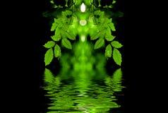 O verde deixa a reflexão Imagens de Stock Royalty Free