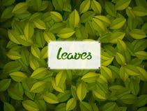 O verde deixa a textura Fotos de Stock Royalty Free