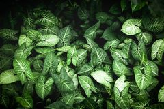 o verde deixa a textura do fundo Imagem de Stock
