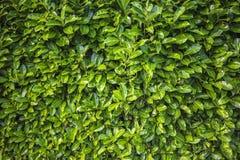 O verde deixa a textura do teste padrão Imagem de Stock Royalty Free