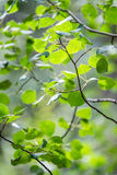 O verde deixa a textura do teste padrão do fundo fotos de stock
