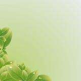 O verde deixa a textura. Ilustração do vetor. Fotografia de Stock Royalty Free