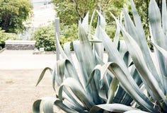 "O verde deixa a textura para arbusto planta do †do projeto do contexto da ""na rua de Catania, Sicília, Itália imagens de stock royalty free"