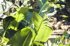 "O verde deixa a textura para arbusto planta do †do projeto do contexto da ""na rua de Catania, Sicília, Itália imagens de stock"
