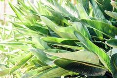 """O verde deixa a textura para arbusto planta do †do projeto do contexto da """"na rua de Catania, Sicília, Itália foto de stock royalty free"""