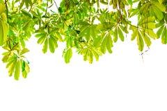 o verde deixa a vista inferior, isolada Fotos de Stock Royalty Free