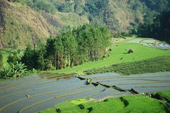 O verde do jawa do bumi Fotografia de Stock