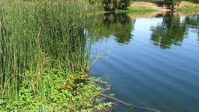 O verde do movimento rápido cobre na borda de reflexões da lagoa filme