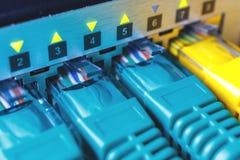 O verde dos cabos de remendo é introduzido nos portos do interruptor, a luz verde das cintilações da indicação fotografia de stock royalty free
