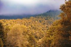 O verde e o sepia tonificam junto árvores Foto de Stock Royalty Free