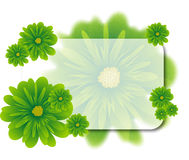 O verde floresce o fundo Imagens de Stock Royalty Free