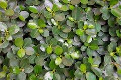 O verde folheia fundo Foto de Stock Royalty Free