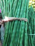 O verde fresco canta a vara Fotografia de Stock