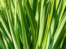 O verde fresco deixa o teste padrão Fotos de Stock Royalty Free