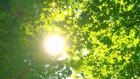 O verde fresco sae no dia ensolarado bonito, nas árvores e na luz solar vídeos de arquivo