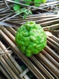 O verde fresco tailandês do citrino imagens de stock