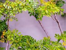 O verde luxúria sae na parte dianteira em uma parede do cimento foto de stock royalty free