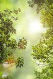 O verde natural deixa o fundo branco Imagem de Stock