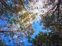 O verde natural deixa o fundo branco Fotos de Stock Royalty Free