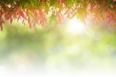 O verde natural deixa o fundo branco Fotografia de Stock