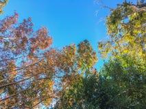 O verde natural deixa o fundo branco Foto de Stock