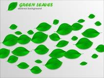 O verde realístico deixa o fundo abstrato Conceito da ecologia Vec Fotos de Stock