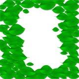 O verde realístico deixa o quadro Conceito da ecologia poster Vetor Imagens de Stock