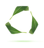 O verde recicl ícones das folhas Fotografia de Stock Royalty Free
