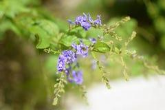 O verde roxo da flor sae de plantas Fotos de Stock