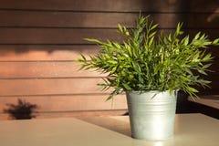 O verde sae da planta em um potenciômetro fotos de stock royalty free