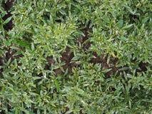 O verde sae das plantas que crescem na terra, vista superior Fotografia de Stock Royalty Free