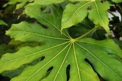 O verde sae em agosto Fotos de Stock