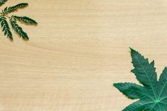 O verde sae mínimo no fundo de madeira fotos de stock