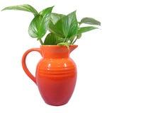 O verde sae no jarro vermelho brilhante isolado no fundo branco Foto de Stock