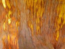 O verde seco da banana deixa a textura Foto de Stock
