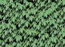O verde sem emenda deixa o teste padrão Imagens de Stock Royalty Free