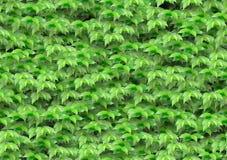 O verde sem emenda deixa o teste padrão Fotografia de Stock Royalty Free